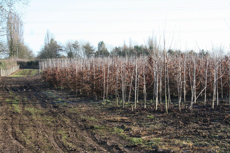 Bare-Root Season